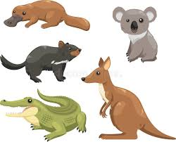 imagenes animales australia animales australia 1 stock de ilustración ilustración de pintura