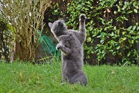 Funny Memes About Dancing - paf tika on twitter dancing dance cat dancing funny