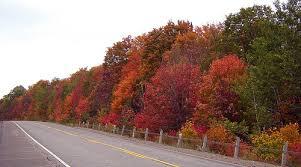 canadian fall foliage u2013 reports drives natural history
