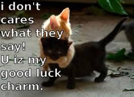 Cat Hug Meme - pin by cat designs on kitty awareness pinterest kitty