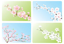 cherry blossom wallpaper pack free photoshop brushes at brusheezy
