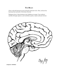 ap psych anatomy the brain coloring worksheet visual map