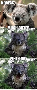 Koala Bear Meme - koala bear meme kill it with fire