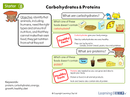 balanced diets a year 3 science worksheet