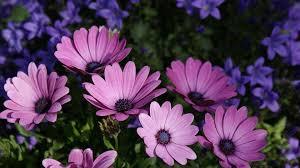 free photo flowers flower garden free image on pixabay 1238146