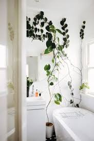 Plants To Keep In Bathroom A Recently Renovated Jungle Inspired Wine Country Home Justina