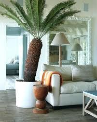 living room trendy living room trees living room trees