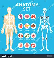 Anatomy Pancreas Human Body Anatomy Set Anatomy Infographics Human Internal Stock Vector