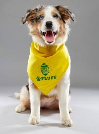 australian shepherd 16 weeks 2017 puppy bowl starting lineup si com