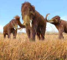 illustration group woolly mammoths feeding wild