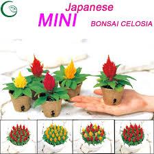easy flowers to grow indoors small indoor plants easy flowers to grow indoors low light indoor