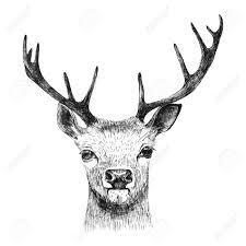 hand drawn deer on white background royalty free cliparts vectors
