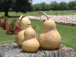 goose gourds thebugsgourdfarm