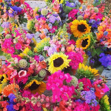 the flowers of summer at 207 best summer flowers images on summer flowers