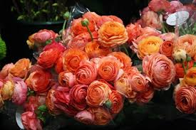 Ranunculus Peach Shades Ranunculus Flowers And Fillers Flowers By