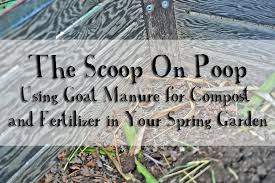 the scoop on goat u2013 using goat manure for compost and