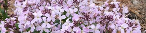 Best Plants For Rock Gardens Plants For Rock Garden Plants For Rock Gardens Photo 9 Alpine