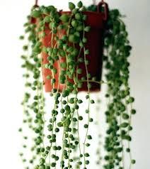 no sun plants sunlight bulbs for plants reportthatlegaladvent info