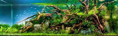 the nature aquarium style u2022 aquascaping love