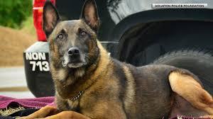 belgian sheepdog houston tx k 9 abc13 com