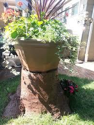 Pictures Of Tree Stump Decorating Ideas 61 Best Tree Stump Uses Images On Pinterest Tree Stumps Garden