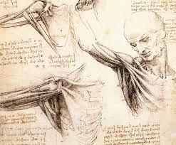 Leonardo Da Vinci Human Anatomy Drawings Leonardo Da Vinci Drawings Online Drawing Lessons