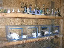 Make Rabbit Hutch Best 25 Wire Rabbit Cages Ideas On Pinterest Cages For Rabbits
