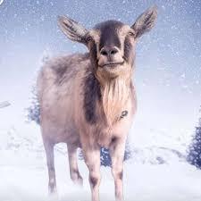 goat rest ye merry gentlemen charity actionaid launches album of