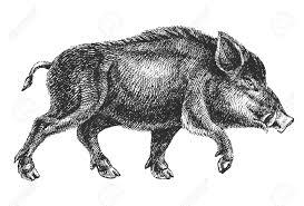 halo warthog drawing boar drawing royalty free cliparts vectors and stock