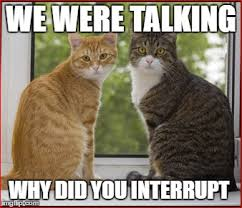 Talking Cat Meme - interruption of the cats imgflip