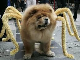 Spider Dog Halloween Costume 23 Adorable Pet Costumes Animals Halloween National Pet Month