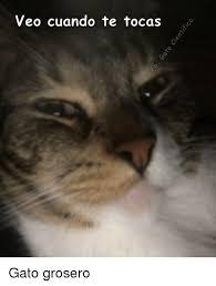 imagenes groseras de gatos veo cuando te tocas gato grosero meme on esmemes com