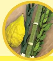 etrog for sale esrog sukkah center buy sukkot esrogim esrogs etrog lulav