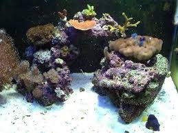 Aquascape Reef Simple And Effective Guide On Reef Aquascaping News Reef Builders