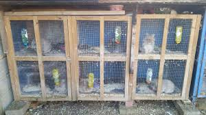 Large Rabbit Hutch 6 Lionheads With 2 Large Rabbit Hutches Cage Luton
