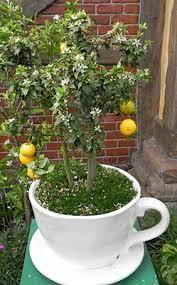 dwarf fruit trees gardening solutions university of florida