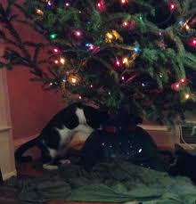 10 ways to cat proof your christmas tree stimeyland