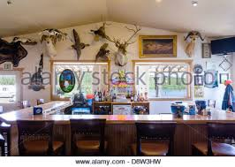 Big Game Room - trophy room collection of big game heads stock photo royalty free