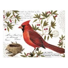 cardinal cards greeting photo cards zazzle