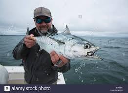 fisherman holds false albacore cape cod massachusetts united