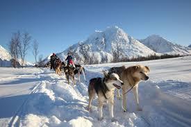 dog sledding on the edge of tromsø u2013 daytime aurora alps dog