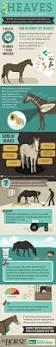 best 25 veterinary nurse courses ideas only on pinterest