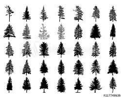 vector set silhouette of different canadian pine trees conifer