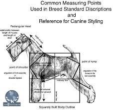 Dog Anatomy Front Leg The Importance Of Canine Anatomy Learn2groomdogs Com