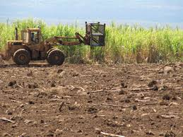 hawaii u0027s last sugar plantation finishes its final harvest nbc news