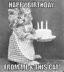 Funny Cat Birthday Meme - the 25 best happy birthday funny cats ideas on pinterest cat