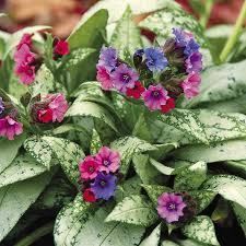 cold hardy plants guaranteed to perform even in frigid usda zones
