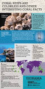 diorama infographic coral reef pbs digital studios