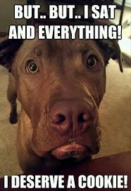 Funny Dog Face Meme - dog meme but but