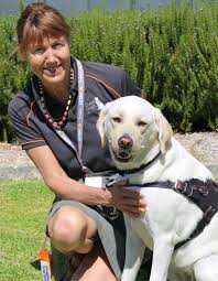 How Does A Guide Dog Help A Blind Person Stages Of Guide Dog Training Guide Dogs Wa